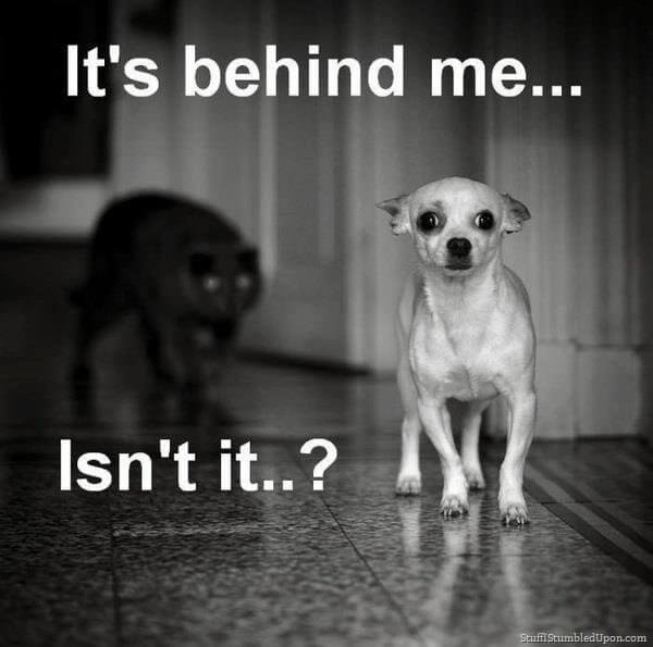 scarycatmeme